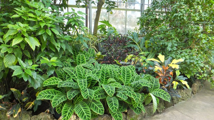 Plants_Conservatory.JPG